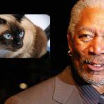 Gatos, Morgan Freeman e dez características de inteligência
